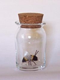 Specimen: Bee